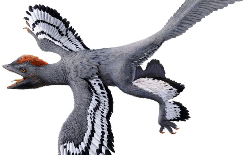 OPINION: Do you think fundraising is as exciting as a four-wingeddinosaur?
